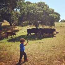 Hiking with Mama (and the cows) - California