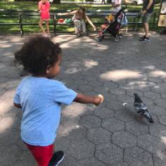 Feeding Pigeons in Central Park (or at least trying to)